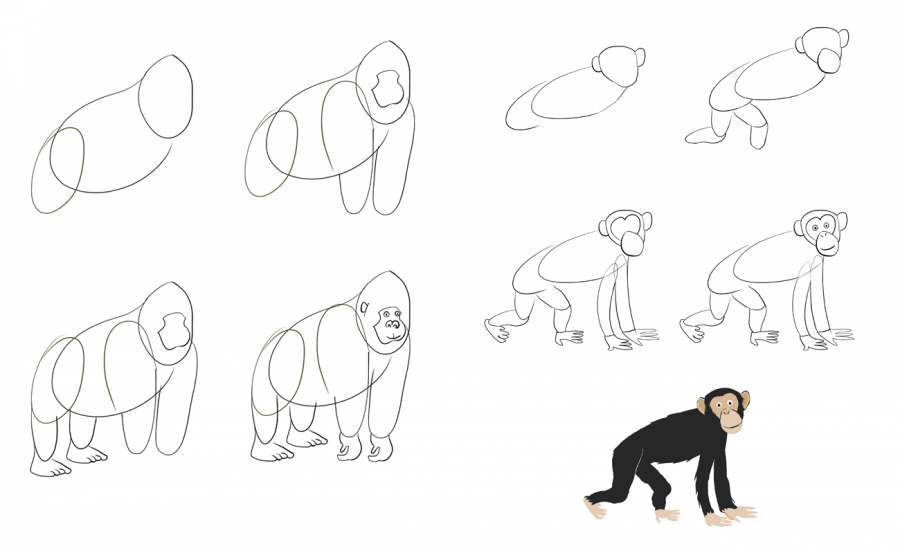 Hoe teken je dieren